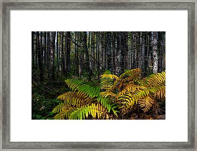 Where The Ferns Grow Framed Print