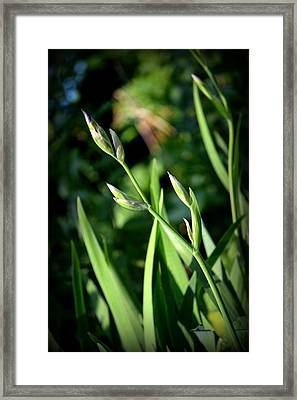 Where The Green Grass Grows.. Framed Print by Rachel Nuest