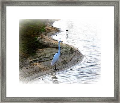 Where The Herons Meet Framed Print by Susanne Van Hulst