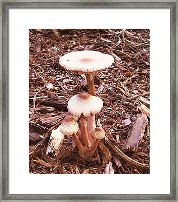 Where's The Toad Framed Print by Mary Ann Southern
