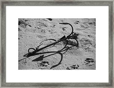 Wheyed Framed Print by Jez C Self