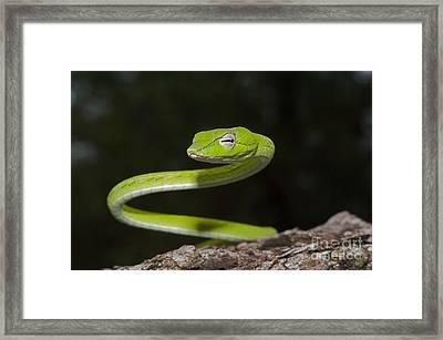 Whip Snake Framed Print