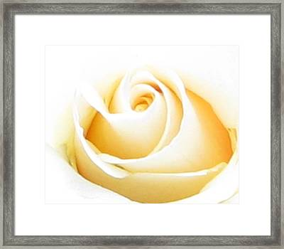 Whipped Butter Cream Rose Micros Framed Print by Judyann Matthews