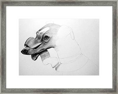 Whippet Framed Print by JF Mondello
