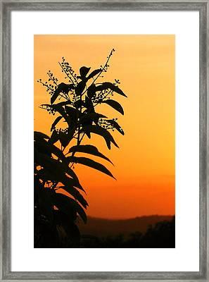 Whipple Hill Framed Print