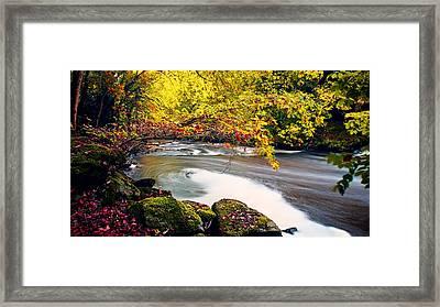 Whirlpool Canopy Framed Print by Kim Shatwell-Irishphotographer