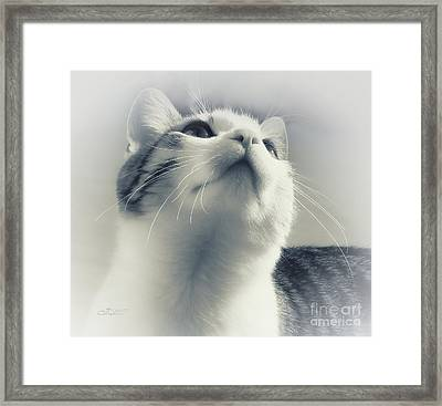 Whiskers Framed Print by Jutta Maria Pusl