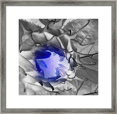 Whisper Blue Framed Print by Sian Lindemann
