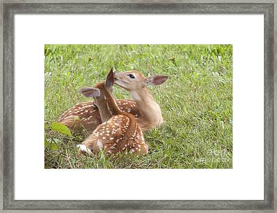 Framed Print featuring the photograph Whispering Fawns by Jeannette Hunt