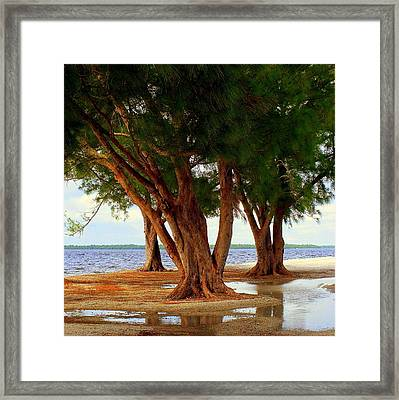 Whispering Trees Of Sanibel Framed Print