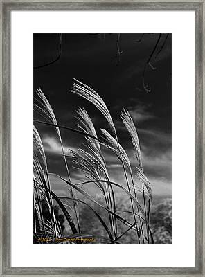 Whispering Wind Framed Print by Dan Crosby