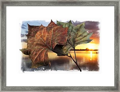 Whispers In The Wind Framed Print by Debra and Dave Vanderlaan