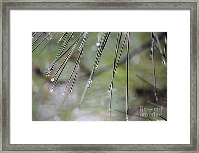 Whispers Of An Autumn Rain Framed Print by Maria Urso
