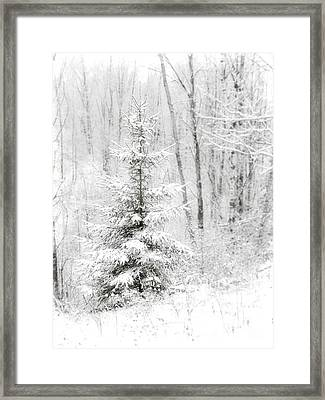 Whispers The Snow Framed Print
