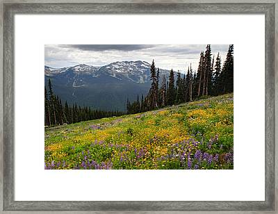 Whistler Blackcomb Wild Flowers In Bloom Framed Print by Pierre Leclerc Photography