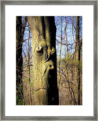 Whistling Tree Framed Print by Mindy Newman