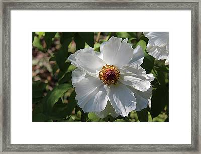 Framed Print featuring the photograph White Alluring by Bob Whitt