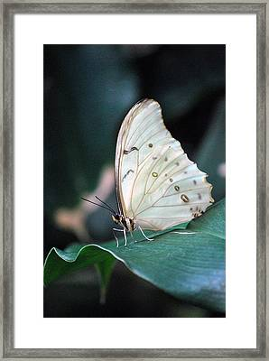 White And Beautiful Framed Print