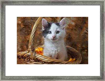 White And Gray Kitty Framed Print by Garry Gay