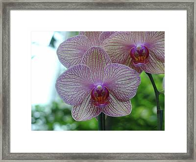 Framed Print featuring the photograph White And Pink Orchid by Charles and Melisa Morrison