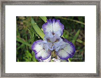 White And Purple Stripe Framed Print