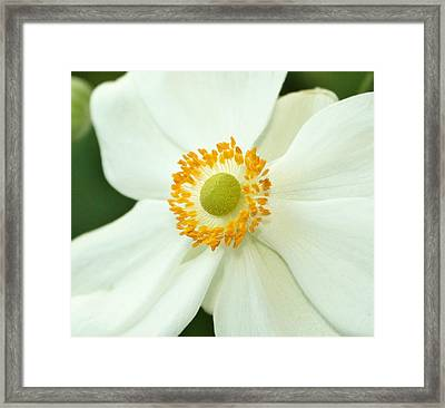 White And Yellow Framed Print by Cathie Tyler