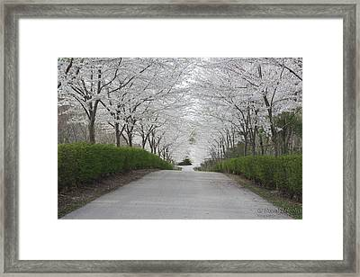 White Arches Framed Print