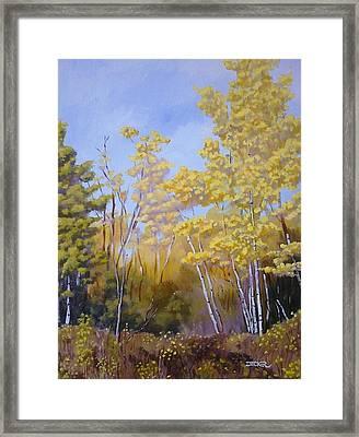White Bark Yellow Leaves Framed Print