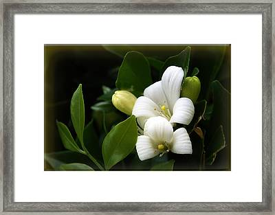 White Beauty Framed Print by Elisabeth Dubois