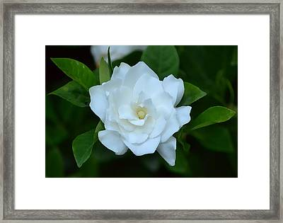Framed Print featuring the photograph White Beauty by Rima Biswas