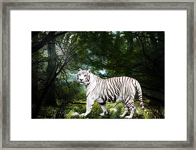 White Bengal Framed Print by Elizabeth Hart
