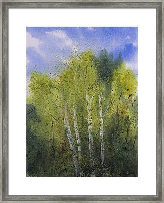 White Birch Trees Framed Print by Debbie Homewood