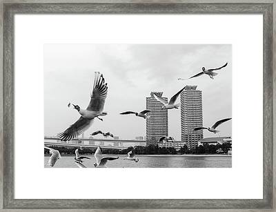 White Birds In Flight Framed Print