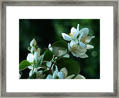 Framed Print featuring the photograph White Buds And Blossoms by Steve Taylor