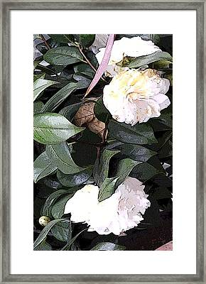 White Camellia Framed Print by Mindy Newman