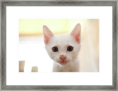 White Cat Framed Print by Junku