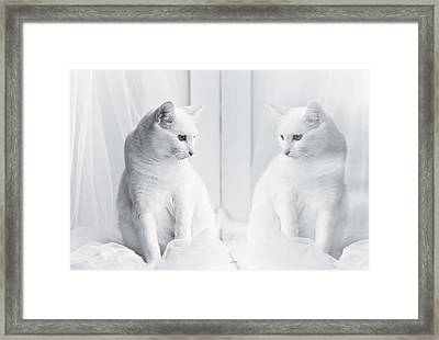 White Cat Reflected In Window Framed Print