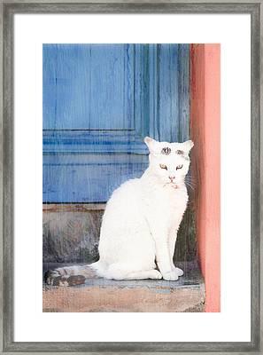 White Cat Framed Print by Tom Gowanlock