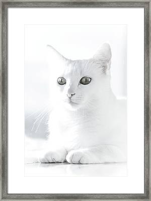 White Cat Framed Print by Vilhjalmur Ingi Vilhjalmsson