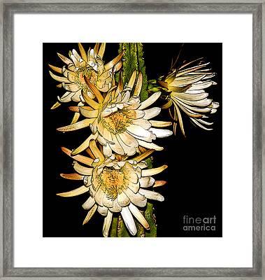 White Cereus Flowers - Digital Art  Framed Print by Dolores Root
