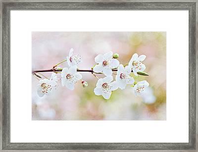 White Cherry Blossom Framed Print by Jacky Parker Photography