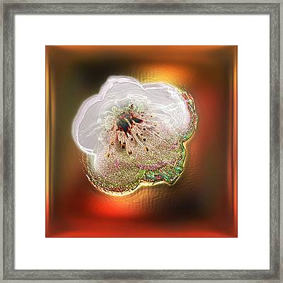 White Cherry Blossom Framed Print by Li   van Saathoff