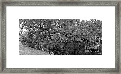 Framed Print featuring the photograph White City Oak Pano by Larry Nieland