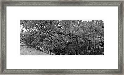 White City Oak Pano Framed Print by Larry Nieland