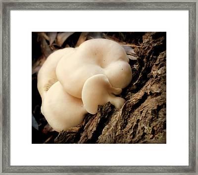 White Cloud Mushrooms Framed Print by Karen Wiles