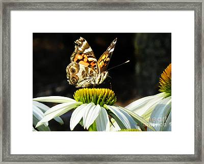 Framed Print featuring the photograph White Cone Flower Visit by Nava Thompson