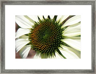 Framed Print featuring the photograph White Coneflower Daisy by Donna Corless