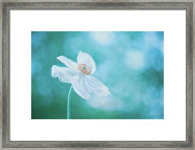 White Cosmos Framed Print by Alexandre Fundone