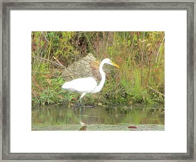 White Crane - Wildlife Framed Print by Susan Carella