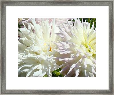 White Dahlia Flowers Art Prints Floral Framed Print by Baslee Troutman